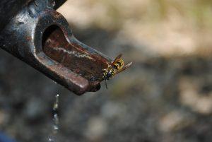 robinet rouillé avec une abeille